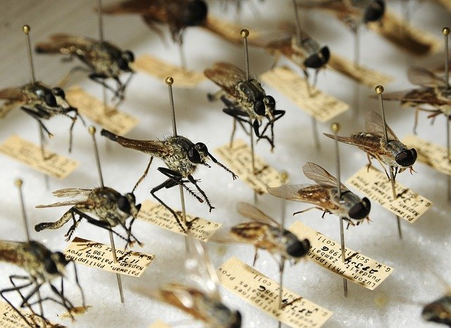 West nile fever meaning in hindi