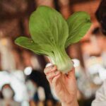 benefits of bok choy logintohealth
