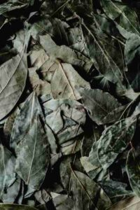 benefits of bay leaf (tej patta)
